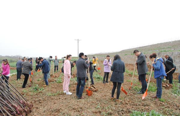 """阳晨集团开展""""创建绿色园林单位、弘扬植树造林美德""""的植树活动"""