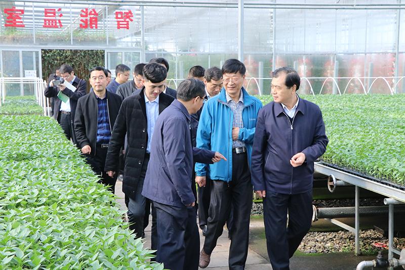 山西省供销合作总社来阳晨视察循环农业及产业扶贫工作